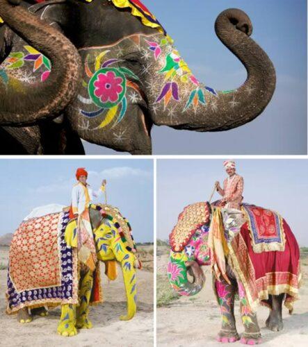 a99083_animal-canvas_10-elephant