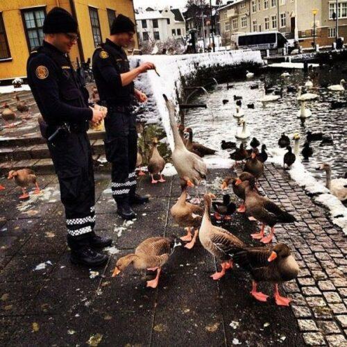 icelandic_police_26